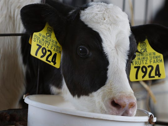 Strutz Farm Inc. north of Two Rivers sees an average