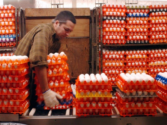 Serguei Diaz loads racks of eggs for washing and cleaning