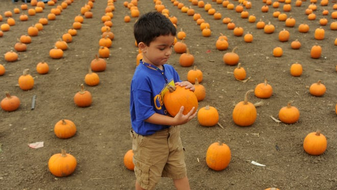 Pumpkins can be put in the compost pile or placed with yard waste after Halloween is over.
