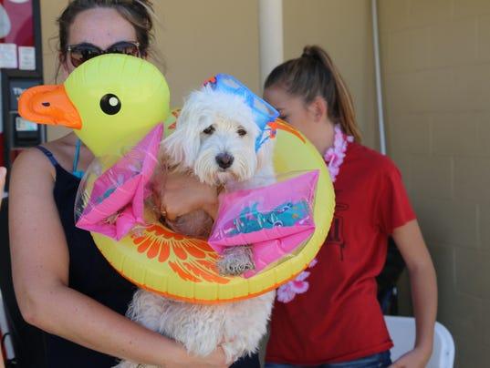 636078957746502747-bliss-doggy-swim.jpg