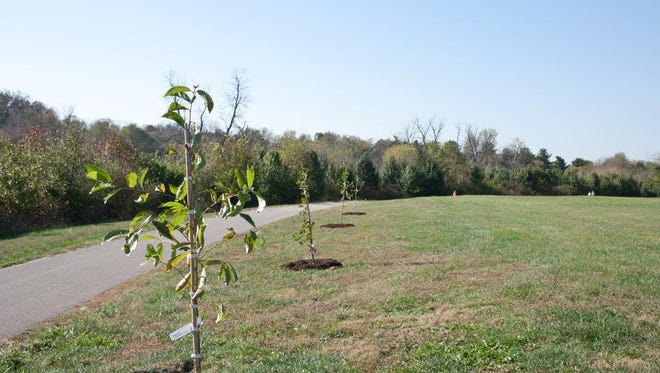 Grant applications to fund tree plantings by nonprofits will be accepted Nov. 1 to Dec. 1 by Kentucky's largest energy company. The program encourages nonprofits with a history of successful plantings to continue their efforts.