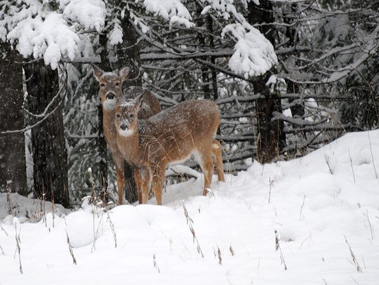 Fifteen years into its struggles with chronic wasting