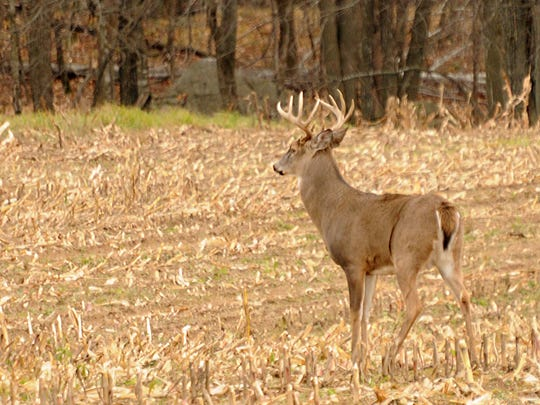 According to the Wisconsin Department of Natural Resources, which operates the Deer Donation Program, 92,000 deer have been donated since 2000, which means more than 3.7 million pounds of venison was sent to Wisconsin food pantries.