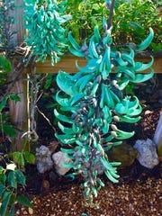 Green jade vine