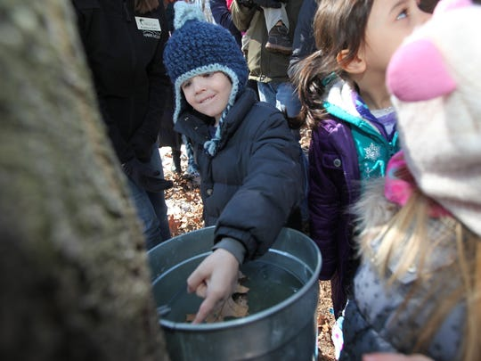 The Tenafly Nature Center gave tours that included showing maple trees that are tapped for sap to make maple syrup. Sunday, March 22, 2015.