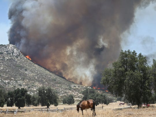 A horse grazes as a nearby mountain is engulfed in a brush fire Wednesday in Campo.