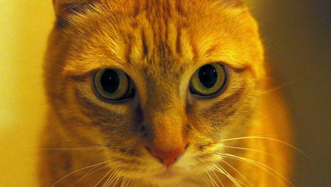 Pet O'Malley stares directly into the camera lens.