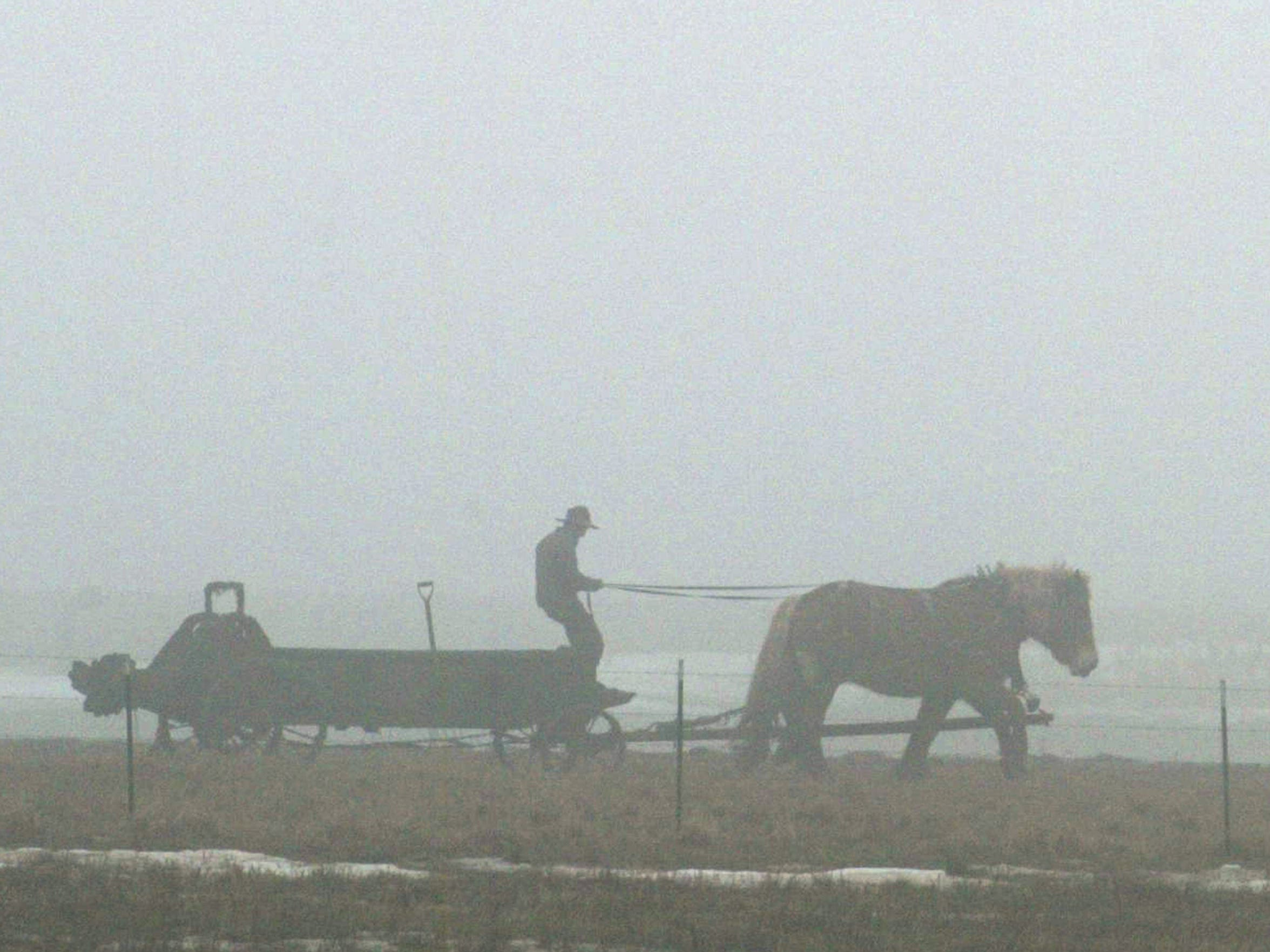 A Clark County Amish farmer drives a manure wagon using a team of horses with a dog running ahead of the rig in 2010.