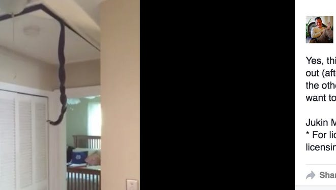 Cringe-worthy video taken by a South Carolina homeowner shows  two snakes dangling from his attic.