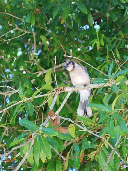 636463407941720381-YARD-DOC-Tree-bird-Nov-26.JPG