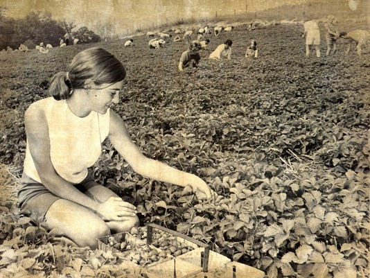 Strawberry pickers pick-it-yourself Art Trantham farm n Canton summer 1972 B