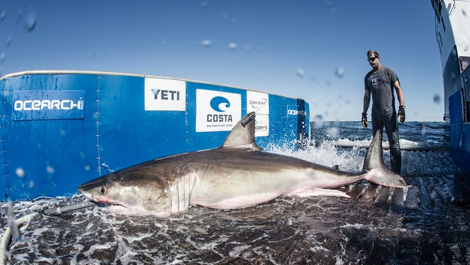 Hilton was tagged by OCEARCH researchers in March 2017 off Hilton Head, South Carolina.