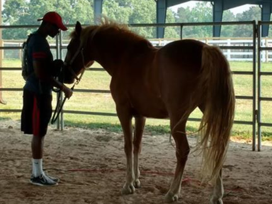 636444420838609713-AJ-bonding-with-therapy-horse-at-ReBoot.png