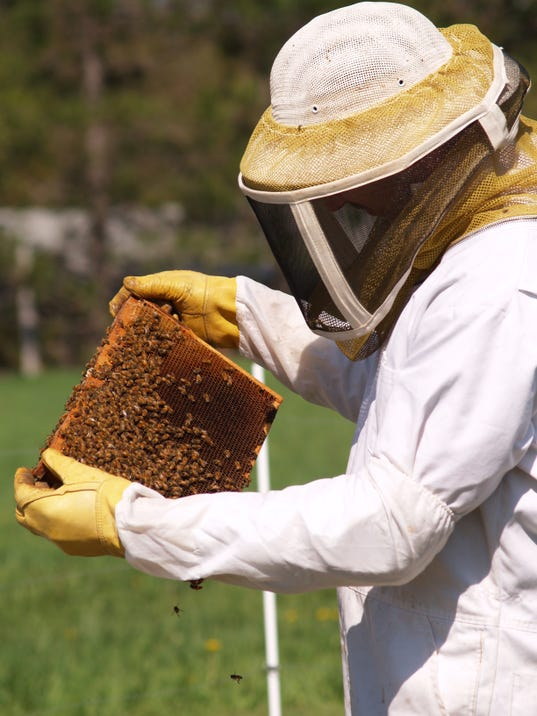 Honeybee die-offs sting beekeepers, economy