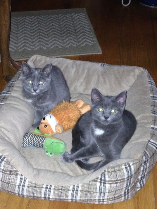adopt a pet minnie and pearl