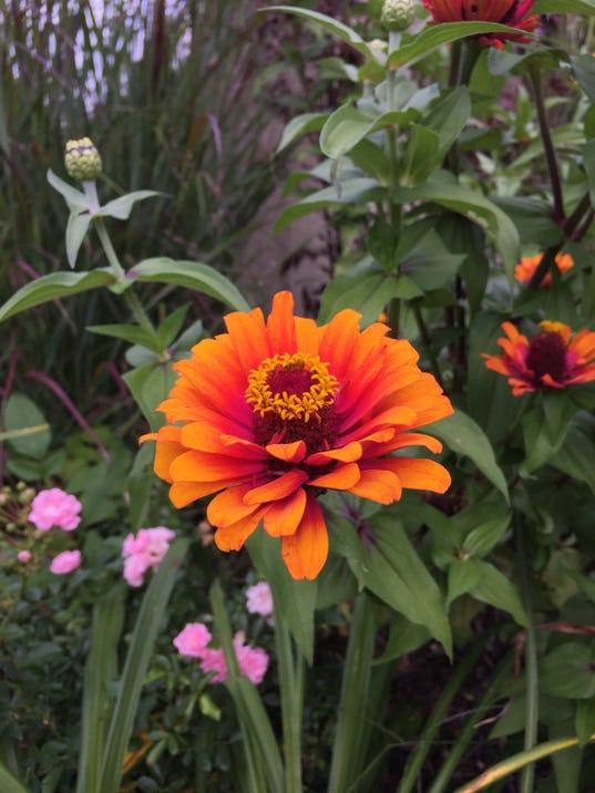 Kottke-fall-blooms.jpg