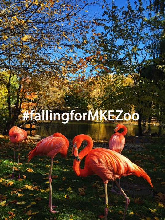 Zoo Instagram Contest