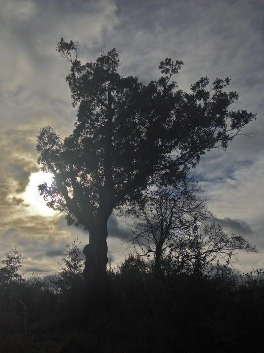 Devil's Tree 3