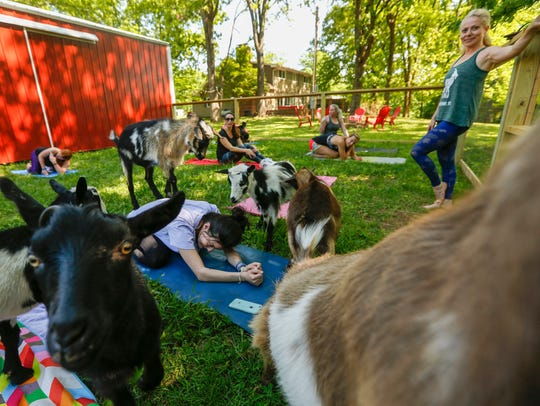 Goats surround Miranda Nelson during Goats and Yoga