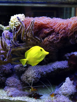 Fish tank file photo