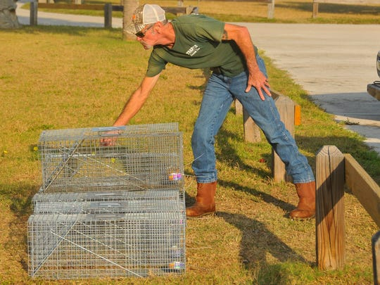 Wildlife Trapper James Dean was called in to trap problem raccoons at Lori Wilson Park in Cocoa Beach, specifically the maritime hammock between the two parking lots at the park. Someone has been feeding the raccoons, and the animals have been approaching people on the boardwalk.