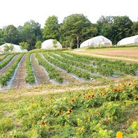 Wegmans' new orchard means even more organic produce
