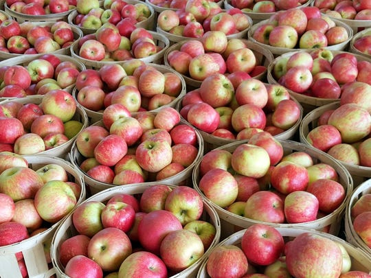 Buckets and buckets of Honeycrisp apples from Melick's Town Farm, the largest apple grower in the state.