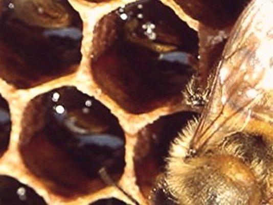Honeycomb-.jpg