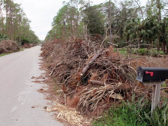 Large piles of trees and brush downed by Hurricane
