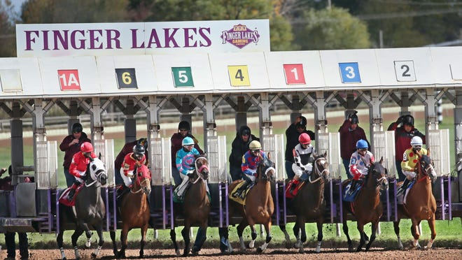Finger Lakes Racetrack is considering adding a turf track to its dirt track.