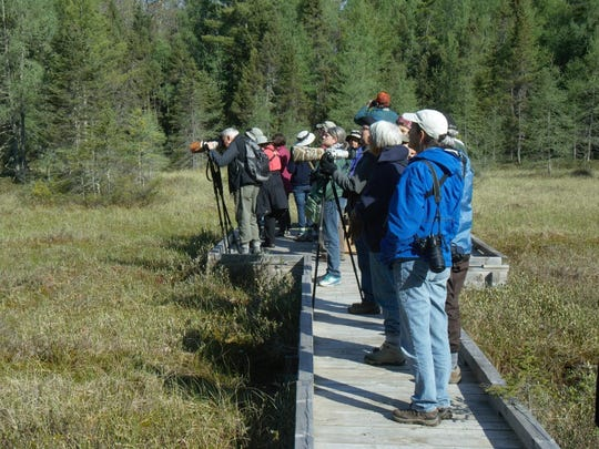Birders from the Chequamegon Bay Birding and Nature festival look for the singer of an unusual song in the bog on the Forest Lodge Nature Trail near Cable, WI
