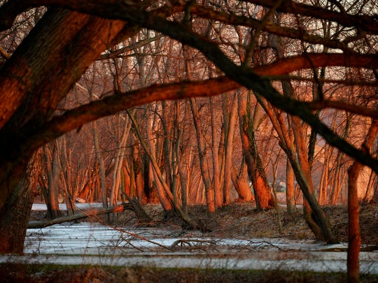 The rising sun casts a glow on trees on the banks of the Susquehanna River in Wrightsville.