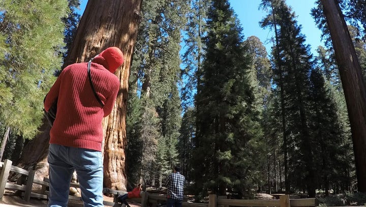 What you need to know if you go to Sequoia National Park this Memorial Day Weekend