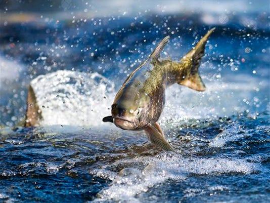 Salmon Restoration_kraj.jpg