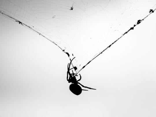 Stock image of a spider on its web in front of storm