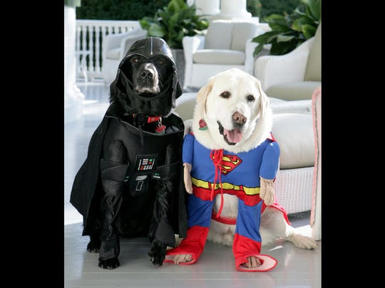 Vice President Dick Cheney's Labrador retrievers Jackson, left, and Dave, right, prepare for Halloween, Tuesday, Oct. 30, 2007, as they sit for a photograph at the Vice President's Residence at the Naval Observatory in Washington, D.C.  Jackson is dressed as Darth Vader, Dave is dressed as Superman.