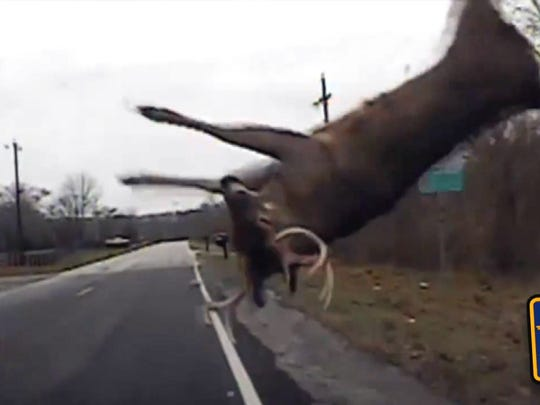 A Kenton County, Kentucky,  police officer's dash cam capture this collision with a deer. The deer survived.