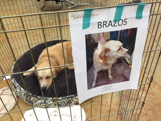 Rescue Dogs Central Pa