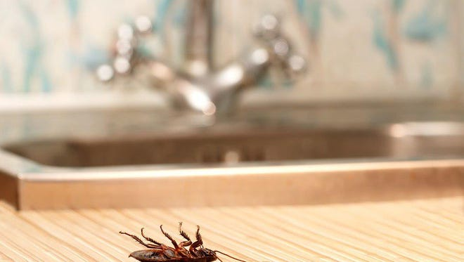 More than just gross, bugs could be a sign of potential issues in your plumbing and HVAC system.