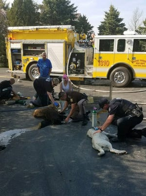 Workers from emergency-response agencies worked together Tuesday to save seven dogs injured in a house fire in Porter County, Ind.