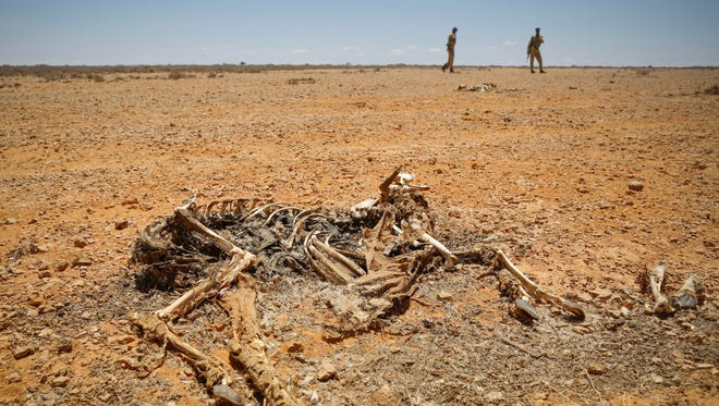 A carcass of an animal that died of a severe drought is seen near a pastoralists' settlement in Bandarbeyla district in Somalia's semi-autonomous region of Puntland, Somalia.