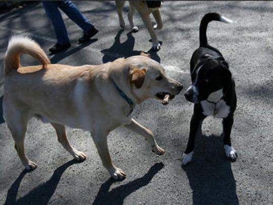 Metuchen Dog Park