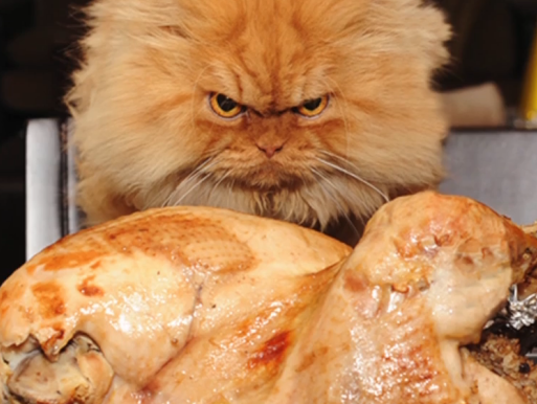 look out grumpy cat garfi angry cat photos go viral