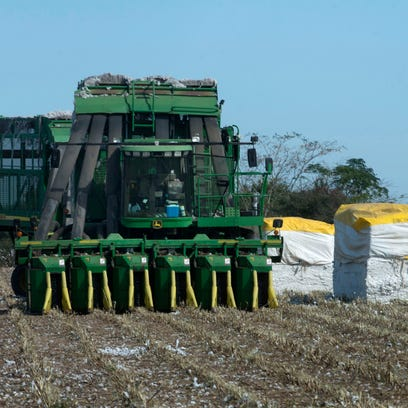 Newly harvested cotton modules in the Jay area. In