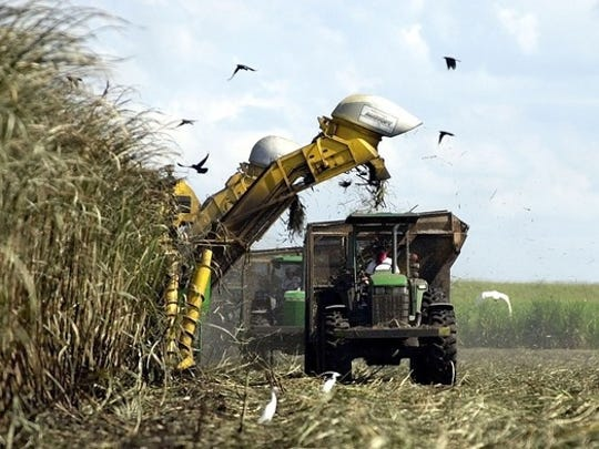 A U.S. Sugar Corp. mechanical harvester cuts sugar cane in a field outside of Clewiston in 2001. (AP FILE PHOTO)