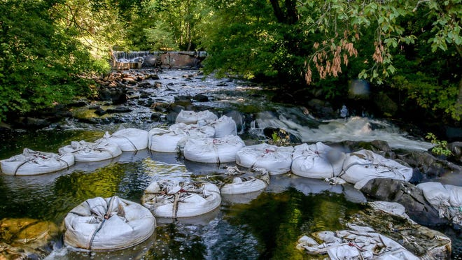 The Nature Conservancy has been working for years with local, state and federal partners to restore a herring run in the Ten Mile River in East Providence. The latest project will address a natural obstruction -- a rocky ledge just beneath the Hunt's Mill Pond dam that herring are having a hard time getting over. Above, weirs made of 3,400-pound sandbags have been placed in the river to model a more permanent solution.