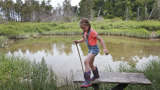 Annabelle LaPointe, 8, explores the salt marsh area around Seaview Learning, where her mom Margo LaPointe of Hingham and Annika Voynow of Marshfield will run a micro-school this fall. They say their cirriculum will suppliment remote learning and give kids a chance to learn primarily outdoors. Greg Derr/The Patriot Ledger