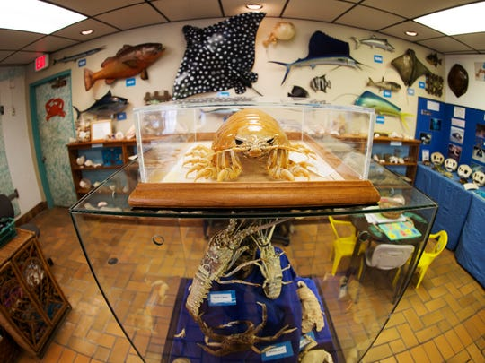 The Marine Science Center offers interactive exhibits, aquariums, touch tank, unique collections and displays.