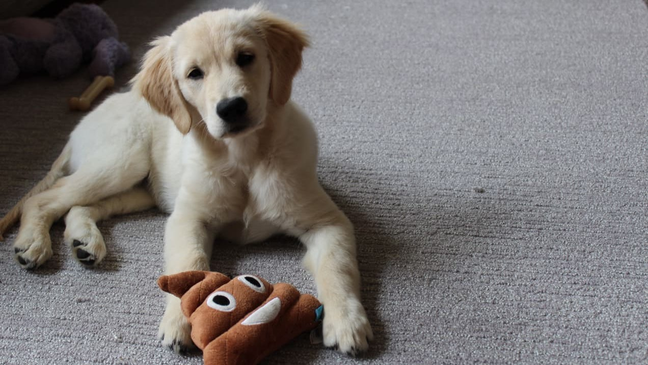 20 must-have products for new dog owners