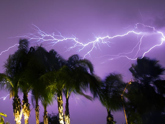 Palm trees wave in the wind while lightning strikes